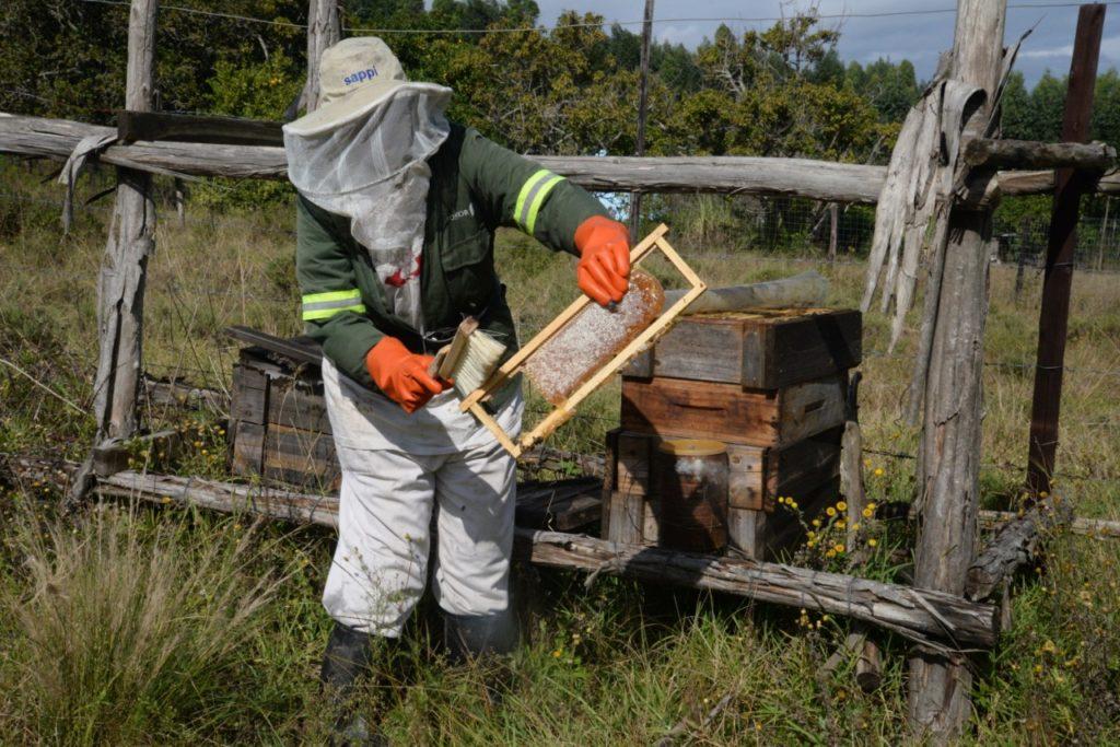 Petritia Hlatswayo at one of her hives