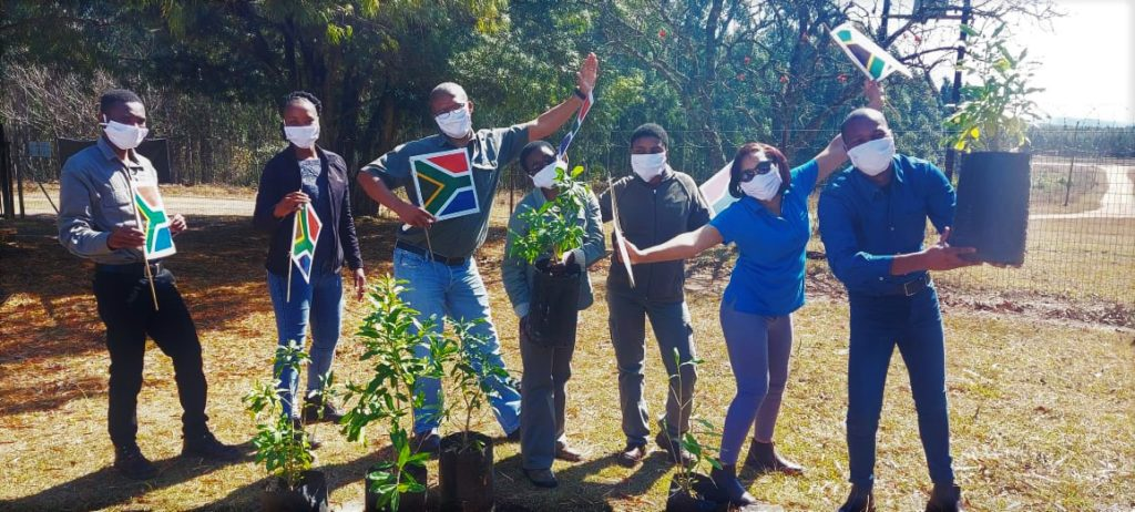 Sappi Forests team at Sutton plantation planting trees and doing the Jerusalema challenge