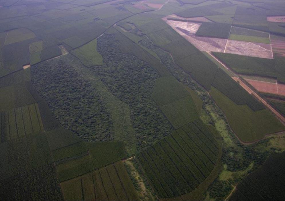 Maryann Shaw – Amangwe forest
